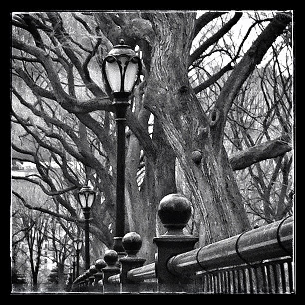 Trees and lamps