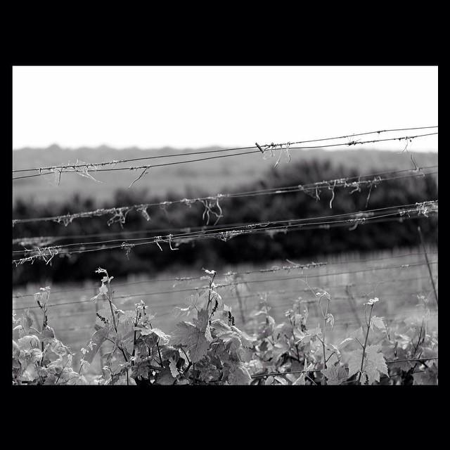 #minimalism42 #iglifecz #modefinedbw #bendenbirkare #minimal_hub #id_minimalism_invite #bnw_add #rsa_bnw #bnw_life_invite #bnw_universe #bnw_globe #bnw_captures #minimal_greece #tgif_bnw #anapilar_angel_bnw #bnw_kings #igraczech #igerscz #justelimage #rustlord_blacknwhite #photo_minimal_ #bnwhisperers #minimal_perfection #nothingisordinary_ #rsa_minimal